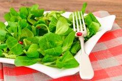 Зеленый свежий салат на плите Стоковое Фото