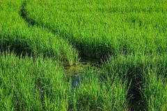 зеленый свет праздника Стоковые Изображения
