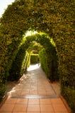 Зеленый свод Стоковая Фотография