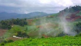 Зеленый сезон в chiangmai Стоковое Изображение RF