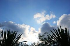 Зеленый силуэт лист на луче солнца неба облака стоковая фотография rf