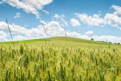зеленый сочный лужок стоковая фотография rf