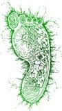 Схематичные doodles: зеленый след ноги Стоковая Фотография RF
