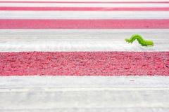 Зеленый теплый идти Стоковые Изображения