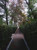 зеленый тоннель Стоковая Фотография