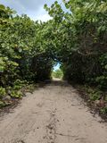 зеленый тоннель Стоковое фото RF