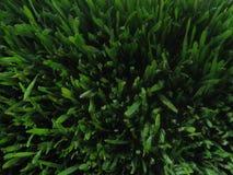 Зеленый травянистый ковер стоковое фото