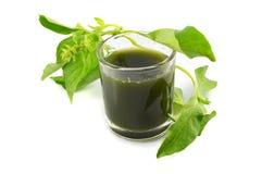 Зеленый травяной базилик стоковая фотография