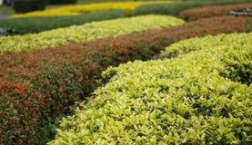 Зеленый традиционный лабиринт с хатой Декоративный сад в форму Стоковые Фотографии RF