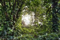Зеленый тропический лес Стоковая Фотография