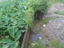 Зеленый туалет Стоковое Фото