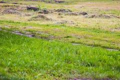 Зеленый луг в летнем дне Стоковые Фотографии RF