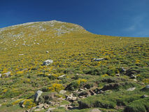 Зеленый луг горы с утесами стоковое изображение rf