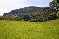 Зеленый луг горы с Wildflowers Стоковые Изображения RF