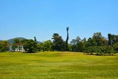 Зеленый луг и разнообразие заводов и деревьев в королевское ботаническом Стоковые Фотографии RF