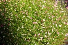 Зеленый луг с красивый малый bloomering цветет Стоковые Фотографии RF