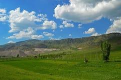 Зеленый луг с резервами руды в предпосылке Стоковые Изображения