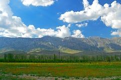Зеленый луг с цветками мака Стоковые Изображения RF