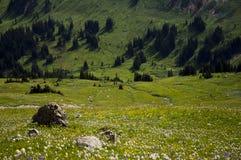 Зеленый луг, Pemberton Стоковые Изображения