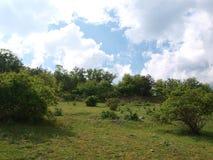 Зеленый луг XI Стоковые Фотографии RF