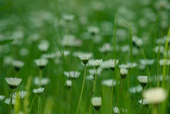 Зеленый лужок весны Стоковые Фото