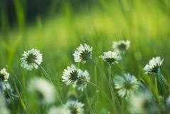 Зеленый лужок весны стоковое фото rf