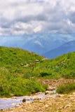 Зеленый лужок с цветками и потоком воды и горы на предпосылке Стоковая Фотография