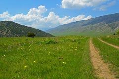 Зеленый лужок с цветками Стоковое Фото