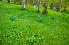 Зеленый лужок с цветками Стоковые Фотографии RF