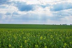 зеленый лужок Стоковая Фотография