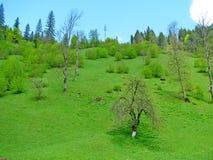 зеленый лужок Стоковое Изображение