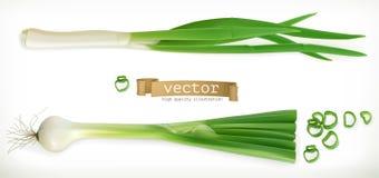 Зеленый лук Vegetable значок вектора Стоковая Фотография RF