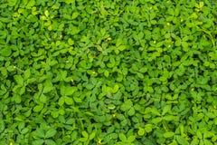 Зеленый урожай крышки Стоковая Фотография RF