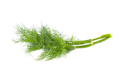 Зеленый фенхель изолированный на белой предпосылке Стоковые Изображения RF