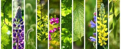 Зеленый флористический комплект лета Стоковое фото RF