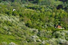 зеленый холм стоковое фото