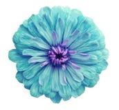 Зеленый цветок, белизна изолировал предпосылку с путем клиппирования Крупный план отсутствие теней; Стоковые Фото