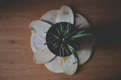Зеленый цветок на таблице рабочего места Стоковая Фотография