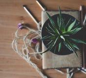Зеленый цветок на таблице рабочего места Стоковое Фото