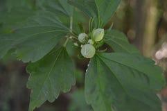 Зеленый цветок Стоковое Изображение RF