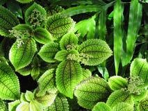 Зеленый цветок стоковые фото