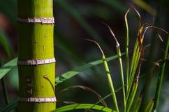 Зеленый цветок Стоковое Фото