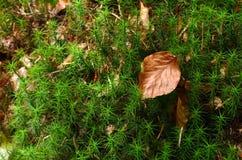 Зеленый цветок Стоковая Фотография