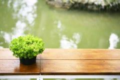 Зеленый цветочный горшок на таблице около реки Стоковые Изображения