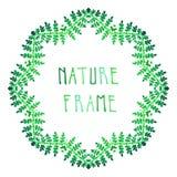 Зеленый цвет акварели выходит рамка вектора папоротника Стоковые Изображения