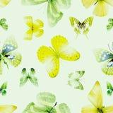 Зеленый цвет 04 бабочки безшовный Стоковое фото RF