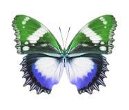 Зеленый цвет бабочки голубой Стоковое Изображение RF