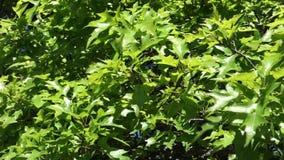зеленый цвет ветвей выходит saplings вал сток-видео