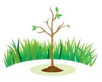 зеленый цвет ветвей выходит saplings вал Стоковые Изображения RF