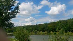 зеленый цвет ветвей никто лето неба riverbank Стоковые Изображения
